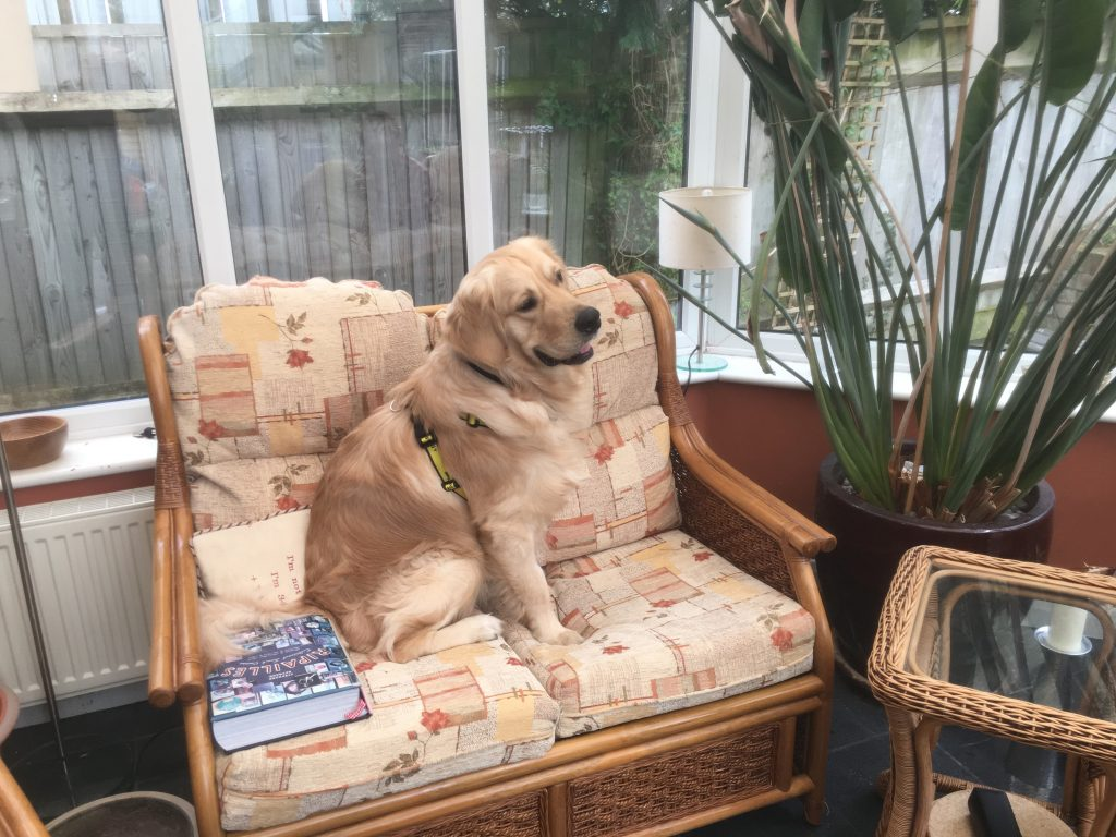 Monty in the conservatory