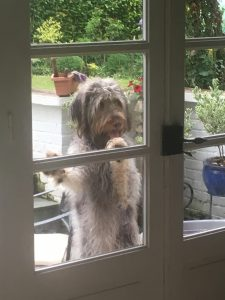 Charlie at the window