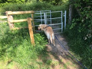 Monty waiting at the kissing gate.
