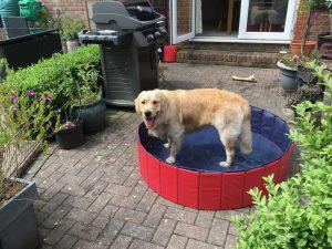 Monty having a dip in his pool