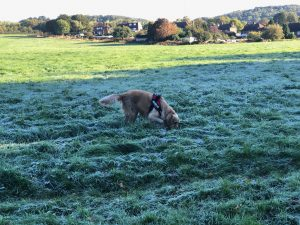 Tylers Close field was really frosty this morning where the sun hadn't got to it!