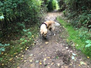 Having a sniff around in the path between The Hollow and Tylers Close Field!